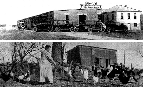 Above: P. McCarthy & Sons, circa 1920s. Below: Sherborn matron with chickens, 1907.